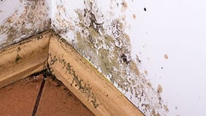 Mold damage on baseboard wall floor
